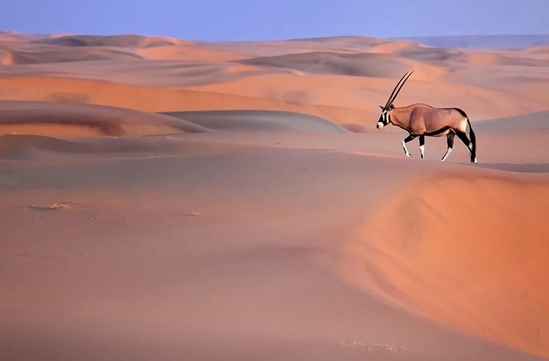 Orynx Namibia